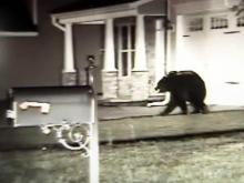 Black bear spotted roaming though Hope Mills