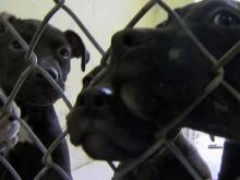 Dozens line up to adopt dogs seized from puppy mill