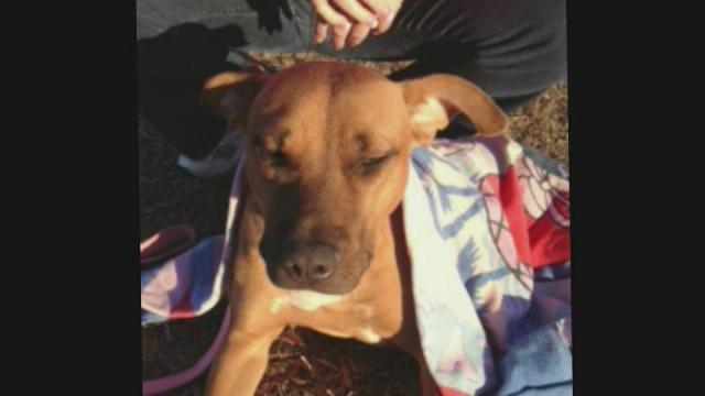 Dog in Rocky Mount dies after being shot in stomach