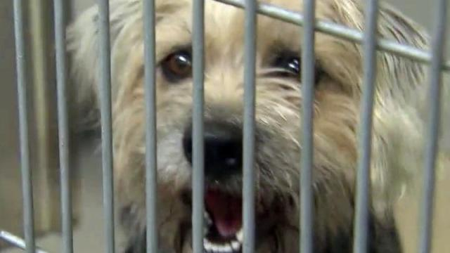 About 75 percent of the 1,000 dogs and cats that the Cumberland County Animal Shelter takes in each month are euthanized.