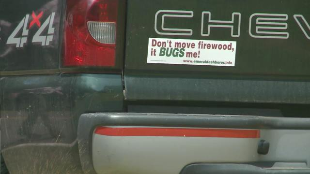 Bugs bumpersticker