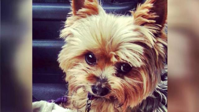 Dog stolen from Durham home