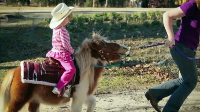 Splash, miniature horse mauled by dogs