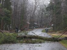 Downed trees knock out power to thousands