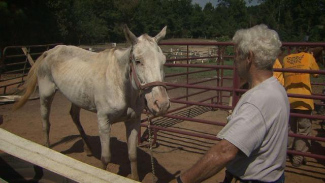 Neglected animals in Warren County
