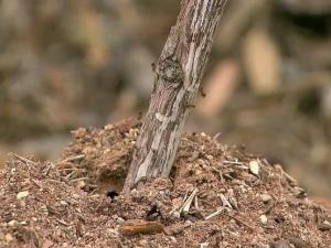 Wet, warm weather allows fire ants to flourish.