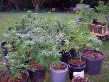Moore County authorities on Wednesday seized more than 50 marijuana plants worth $104,000 from the back yard of a home in Carthage.