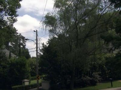 Homeowner offers to pay Duke to prune tree in power lines