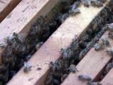 beehive, honeybees