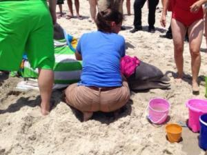 A dolphin washed ashore on Kure Beach July 10. Courtesy: Audrey Schneider