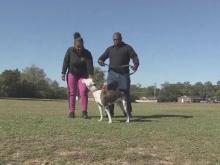 Deputy loses job amid dog custody battle