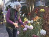 Mum of mums sheds light on mystery flower