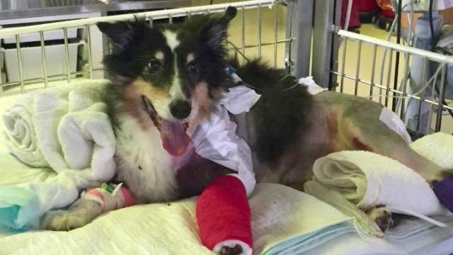 A stranger has helped raise $10,000 for the vet bill of a dog that was hit by a car.