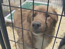 Hundreds of dogs, cats ready for adoption in Sanford