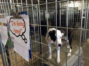 Pet adoptions in Sanford
