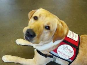 Franklin County inmates give back by training service dogs