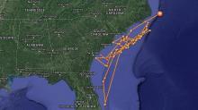Tracker app shows 3 great white sharks off NC coast :: WRAL com