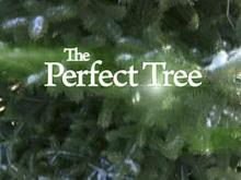 Focal Point: The Perfect Tree