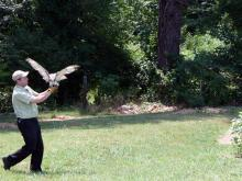 Release of Red-tailed Hawk Courtesy: NC Museum of Natural Sciences