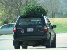 A buyer leaves the N.C. State Farmer's Market with a fresh Christmas tree.