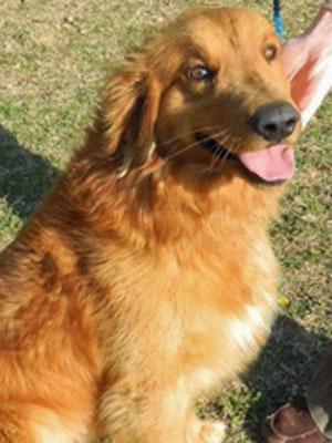 The Neuse River Golden Retriever Rescue in Raleigh has introduced its newest available dog, Tracker, named after WRAL's beloved newshound who passed away in February.