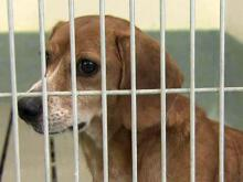 Volunteers criticize rising kill rate at Wake animal shelter