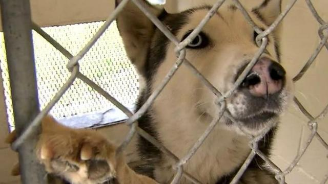 For dogs and cats that end up at the Montgomery County Animal Shelter, the journey is like being sent to death row. The shelter, which has the highest kill rate in the state, euthanized nearly 1,200 animals - 100 percent of cats and 98 percent of dogs - last year, records show.