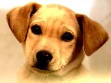 NC shelter kills 99 percent of animals