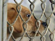 State says rural counties must make effort to upgrade animal shelters