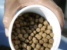 TOXIC PET FOOD
