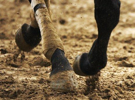 THURSDAY: A horse runs in the mud as workouts continue for the 135th Kentucky Derby at Churchill Downs, in Louisville, Ky. (AP Photo/Charlie Riedel)