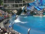 Seaworld plans Orcas expansion