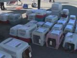 Dogs and cats look for new homes during holidays