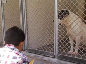 This six-year-old boy reads to homeless dogs.