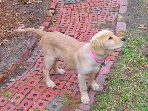 Police said Lulu was taken from her East Cornwall Road home between 1 and 1:30 p.m. Monday, Jan. 14, 2008.
