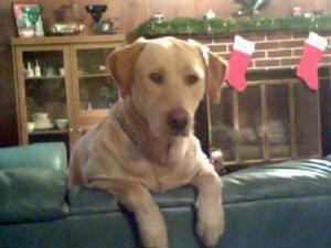 Durham, a 45-pound Labrador retriever, was shot and killed Thursday by a Mount Olive police officer.