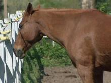 Owners grieve after 13 horses killed in barn fire