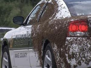 A Wake County sheriff's deputy found himself in the middle of a swarm of bees Tuesday when he went to check on a report of a disabled truck near the Smithfield Road exit off U.S. Highway 64.
