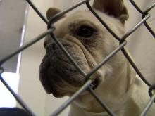 Feds impose new rules on online dog breeders