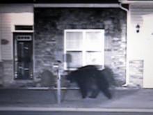 Dash-cam video of bear in Hope Mills