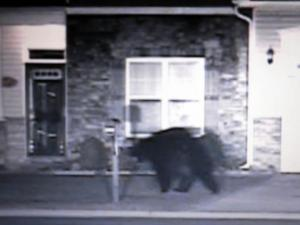 Hope Mills police took a photo of a black bear seen roaming local neighborhoods on May 29-30, 2012. Authorities said the bear is likely migrating to a summer habitat.