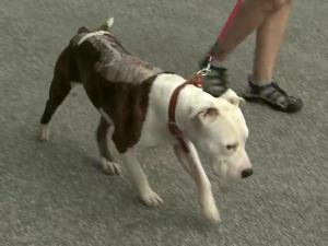 Rescue group The Positive Pit Bull says three dogs found in Wake, Harnett and Johnston counties over the last three months have burn marks on their backs.