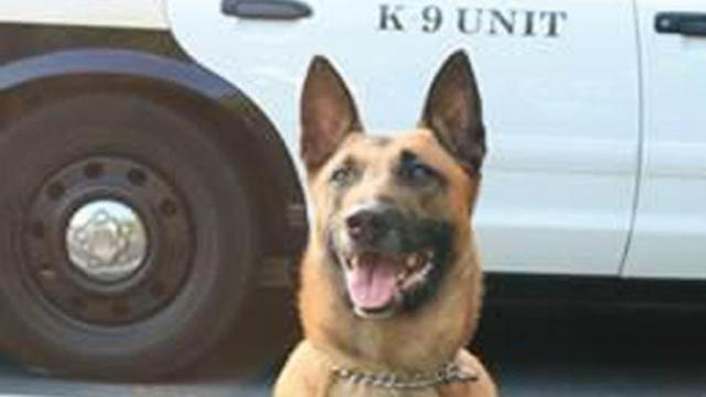 A Chapel Hill Police Department K-9 escaped from a fenced yard Monday afternoon in the Parkwood area of Durham County.