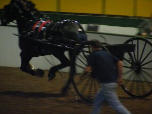 One of the horses took off during the horse show at the Fair Monday night.