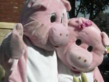 Pigs find love at the Fair