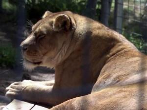 Conservators Center wildlife sanctuary