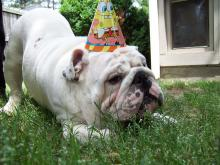 Diesel&#039;s Birthday Party