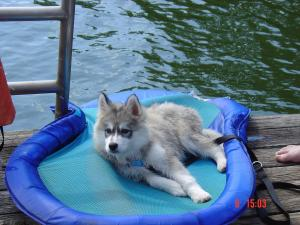 Kody drying out after his first swim.