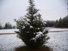 Snow day on Nov. 21, 2008