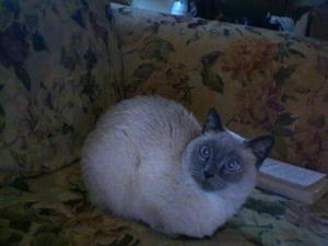 This was my best friends cat named MaudeE.